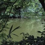 小倉池の静寂
