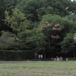 落柿舎界隈の風