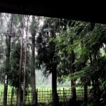 雨すだれの小倉山