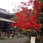 今熊野観音寺-紅葉